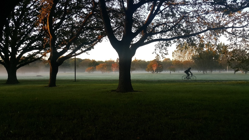 scene of trees and a cyclist on a misty morning in a park